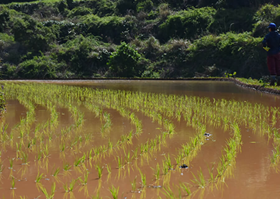 田植え・稲刈り体験