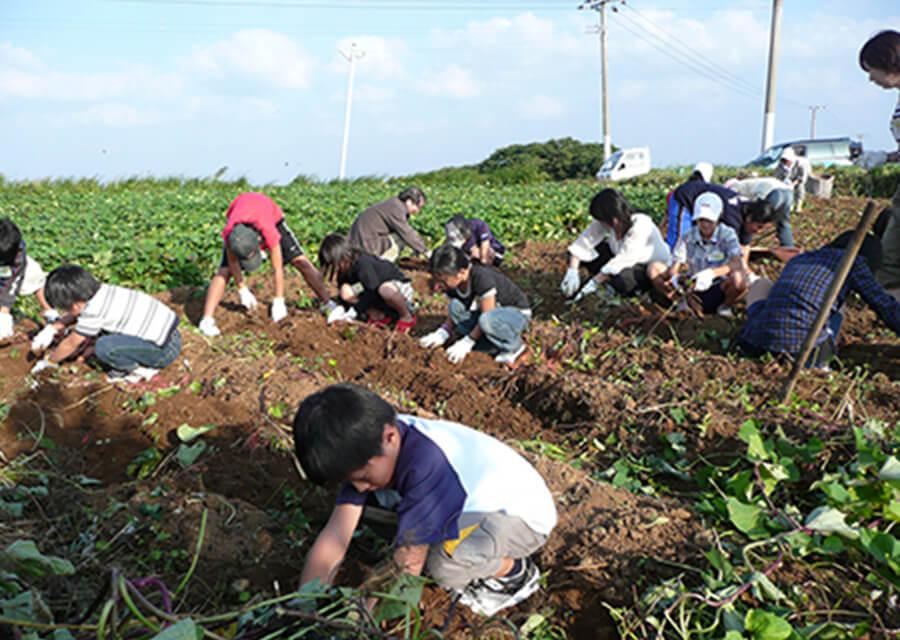 芋植え・芋掘り体験