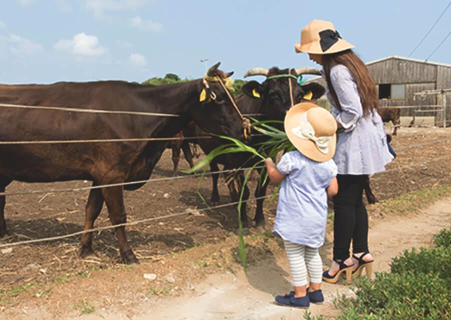 和牛飼育体験